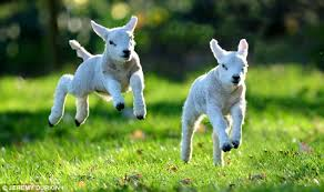 time to spring into action like spring lambs with MindStore Training goal setting tools